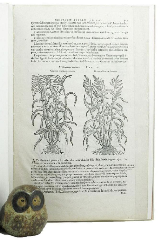 A LEAF FROM THE 1583 REMBERT DODOENS HERBAL PRINTED BY CHRISTOPHER PLANTIN. Dodoens' Herbal Leaf Book, 1583, Carey S. Bliss, Essay.