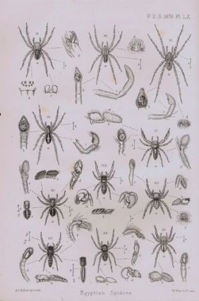 CATALOGUE OF A COLLECTION OF SPIDERS MADE IN EGYPT, Rev. O. P. Cambridge