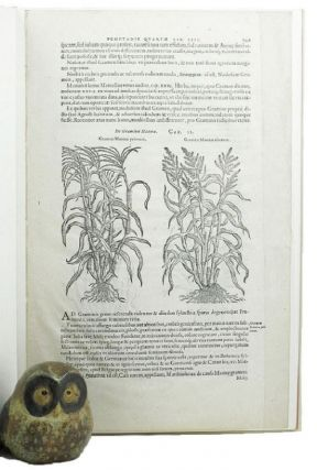 A LEAF FROM THE 1583 REMBERT DODOENS HERBAL PRINTED BY CHRISTOPHER PLANTIN. Dodoens' Herbal Leaf...
