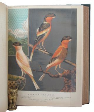 THE ILLUSTRATED BOOK OF CANARIES AND CAGE-BIRDS, BRITISH AND FOREIGN. W. A. Blakston, W. Swaysland, August F. Wiener.